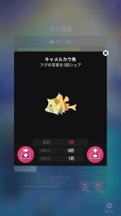 キャメルカウ魚